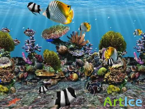 3D Fish School 4.8 Portable