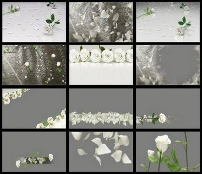 Footages - Editor's Themekit 123: Roses are White (ISO)