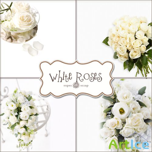 Textures - White Roses Backgrounds