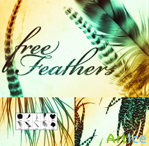 Free feathers