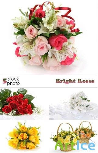 Photos - Bright Roses