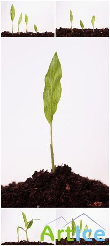 Photo Cliparts - Green Plant