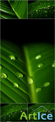Photo Cliparts - Green Leaves