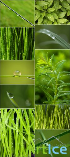 Photo Cliparts - Dew