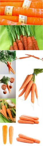 Photo Cliparts - Carrot