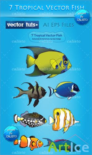 Colorful Vector Premium Pack – Tropical Fish