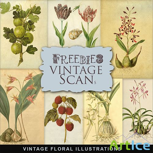 Scrap-kit - Vintage Floral Illustrations 2013