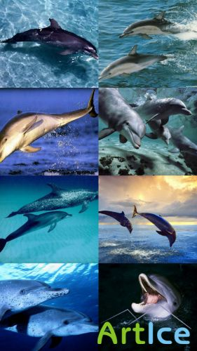 Wallpapers devoted to the Dolphins