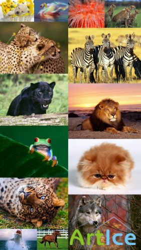 World of Beautiful Animals Wallpapers
