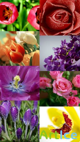 Beautiful Flowers Wallpapers Set 2