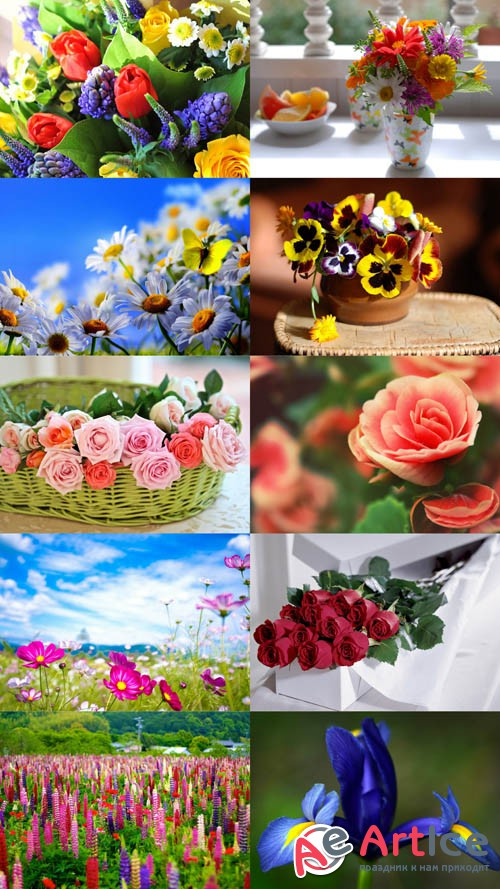 Beautiful Flowers Wallpapers Set 5