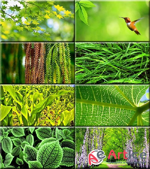 Wallpapers Green Foliage #164