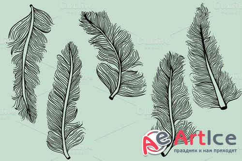 Creativemarket - 5 Illustrated Feathers 15068