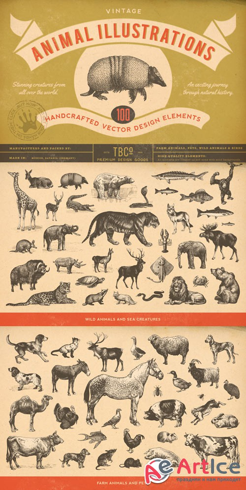 100 Vintage Animal Illustrations