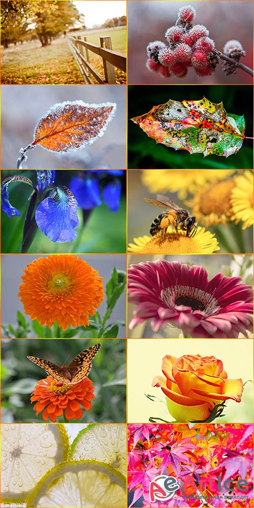 Macro Wallpapers Collection 5