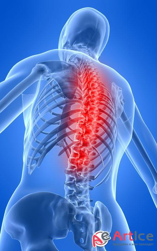 Spine bone anatomy