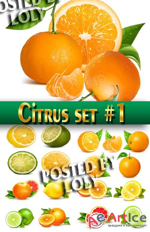 Citrus set #1 - Stock Vector